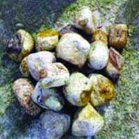 Texture Pebbles