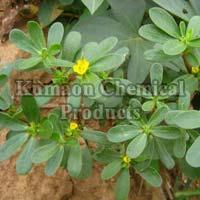 Herbal Concentrate Manufacturer