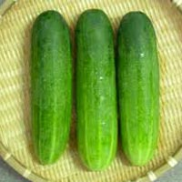 Fresh Green Cucumber