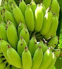 Fresh Banana (AH-110008)