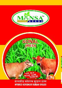 Hybrid Sorghum Sudan Grass Seeds