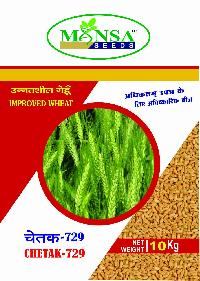 Improved Wheat Chetak - 729