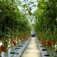 Green Isle Grow Cube