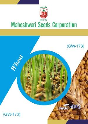 GW-173 Wheat Seeds