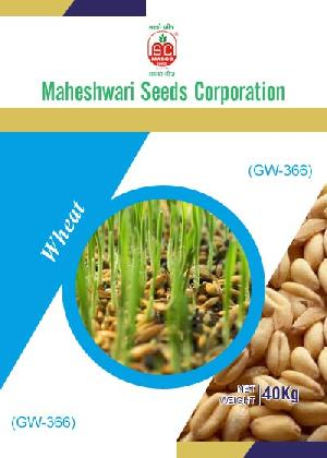 GW-366 Wheat Seeds