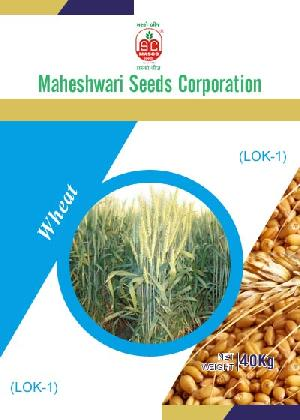 LOK-1 Wheat Seeds