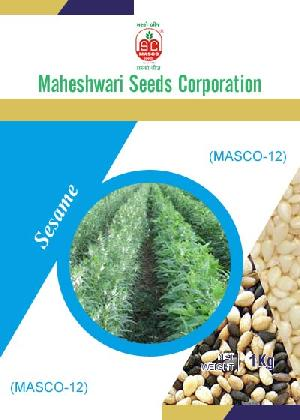 Masco-12 Sesame Seeds