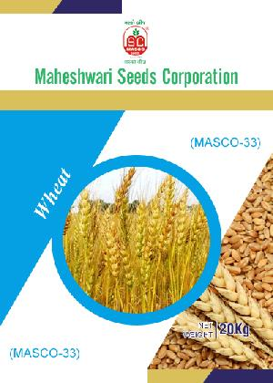Masco-33 Wheat Seeds