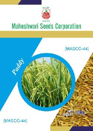 Masco-44 Paddy Seeds