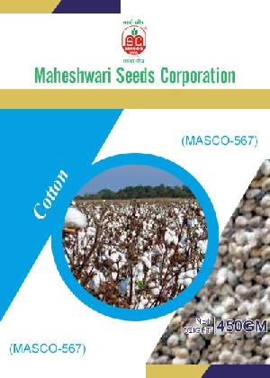 Masco-567 Cotton Seeds