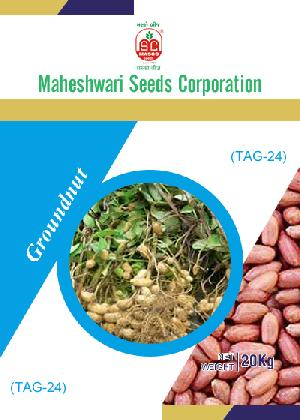 TAG-24 Groundnut Seeds