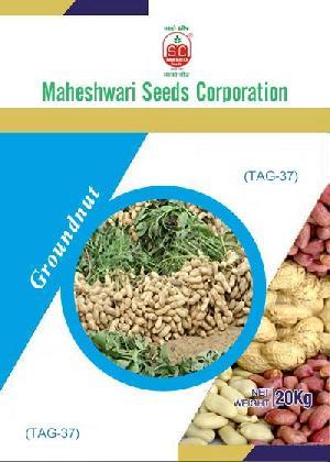 TAG-37 Groundnut Seeds