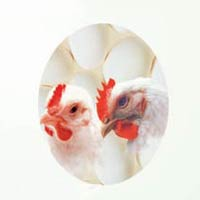 Goutsol Poultry Feed Supplement