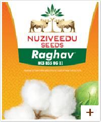 Bt Cotton Seed