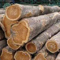 Nigeria Teak Wood Logs