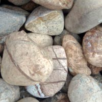 Forest Yellow Pebbles