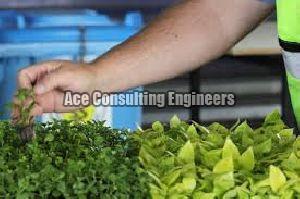 Import Permit Consultant For Plant Quarantine Certification Services