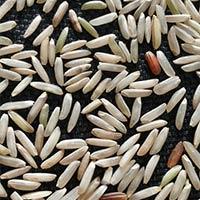 Brown Organic Basmati Rice