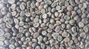 Robusta A Green Coffee Beans