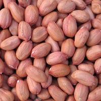 Bold Peanut Kernels 50/60