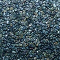 Sunhemp Seed