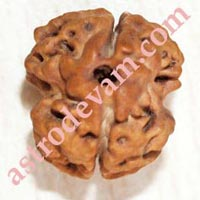Two Face Rudraksha
