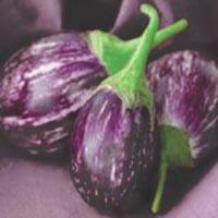 Kranti Hybrid Brinjal Seeds