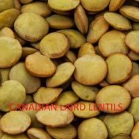 Canadian Laird Lentils