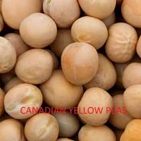Canadian Yellow Peas