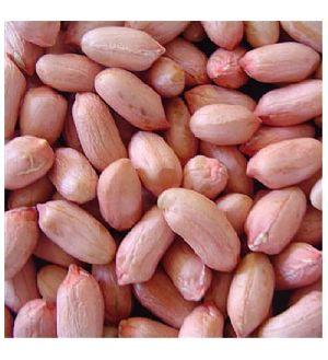 Peanut Kernel 02