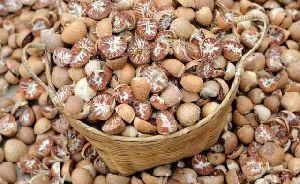 Natural Betel Nuts