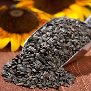 Sunflower Oil Seeds