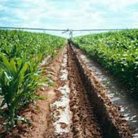 Agribusiness Consultancy