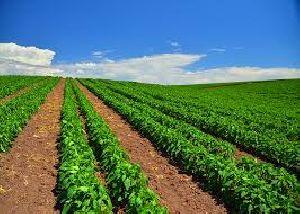 Horticulture Farming Consultancy