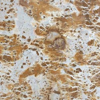 Pyro Yellow Indian Marble Stone