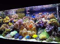 Marine Aquarium 01