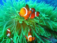 Marine Aquarium 03