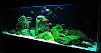 Planted Aquarium 01